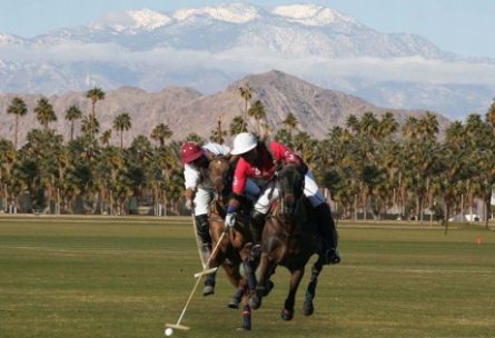 Palm Beach Polo